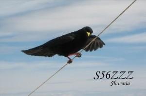 s56zzz-qsl
